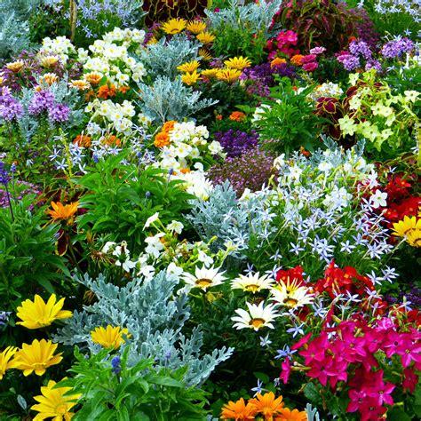 Garten Pflanzen Versand by Pflanzen Versand Kataloge Pflanzen Garten Katalog