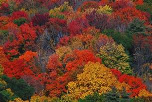leaf colors autumn leaf color reasons for leaf color change in fall