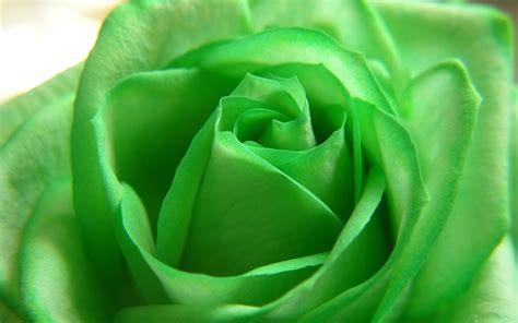wallpaper of green flowers green flowers hd 10 widescreen wallpaper