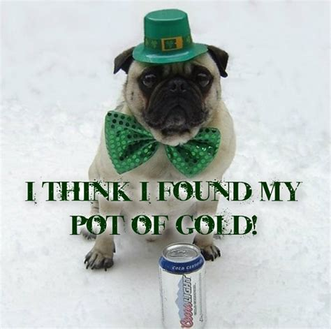 Funny St Patrick Day Meme - funny pug dog st patrick day memes photo 33928901