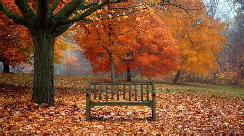 fall bench fall bench wallpapers 62 wallpapers art wallpapers
