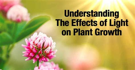 light and plant growth understanding the effects of light on plant growth
