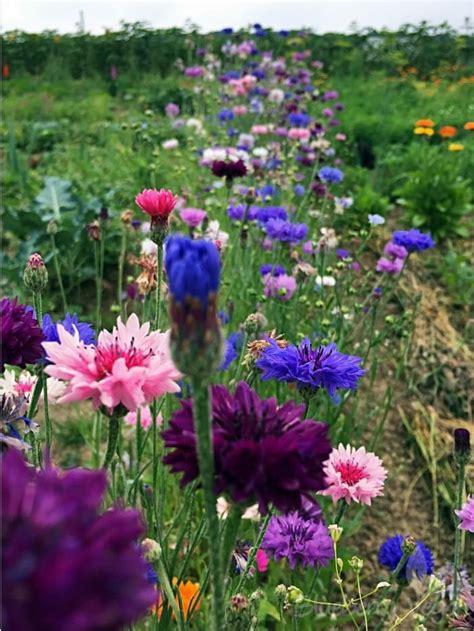 garten gestalten wildblumen wildblumen im garten teilelos wildblumen uwoodland
