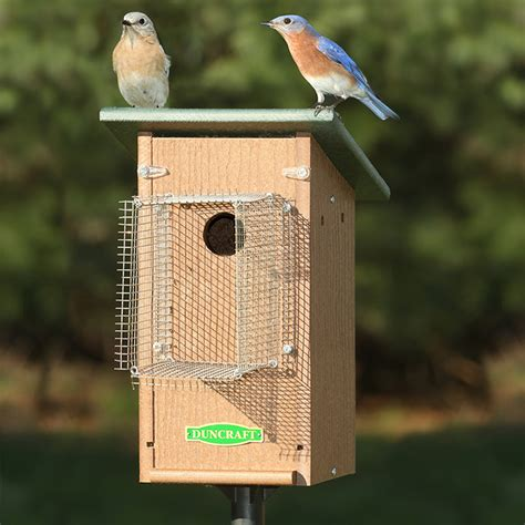 bluebird house pictures house and home design