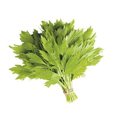 levistico in cucina sedano di monte o levistico aromatiche coltivazione