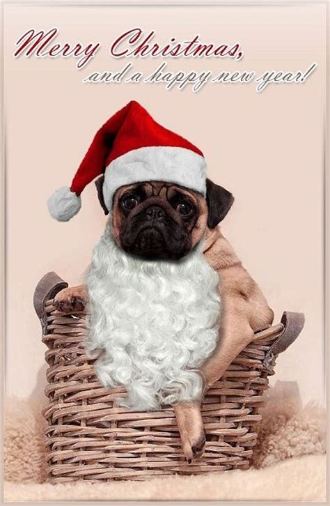 pug card 150 best ideas about pugs on cards merry and