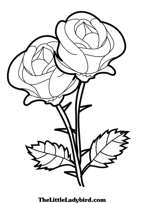 coloring pages of flowers that you can print pages of flowers and roses pages roses 10292