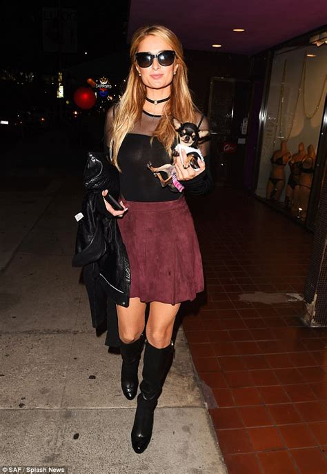 Who Took Hiltons by Takes Chihuahua Out Shopping In La