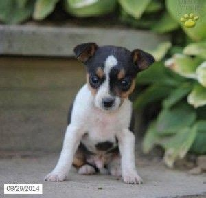 puppies dayton ohio 5052 best images about baby animals on morkie puppies for sale