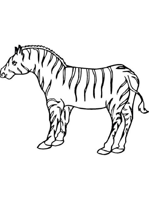 coloring pages animals zebra zebra coloring pages and print zebra coloring pages