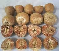 Obat Ejakulasidini Buah Pinang K manfaat dan kandungan biji pinang dunia herbal