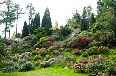 dundee botanic garden scotland