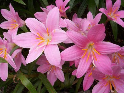 flores lilas imagenes paisajes de flores 20512d1305406023 imagenes de flores