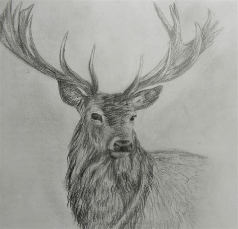 Drawing Sketches O by Pencil Sketches Of Deer Sketches Deer Search