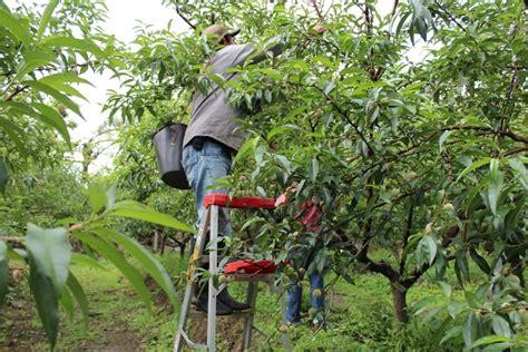 despensa agricola de colombia garc 237 a rovira despensa frut 237 cola de colombia aprendices