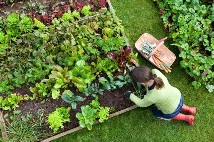 organic vegetable gardens how to start an organic garden grow organic in 9 simple