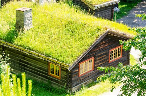 rooftop plants top 10 plants for a living roof inhabitat green design innovation architecture green building