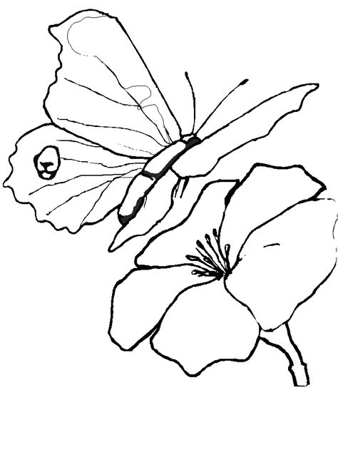 realistic butterfly coloring pages realistic butterfly coloring pages animal coloring pages