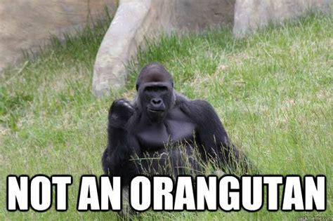 Gorilla Meme - not an orangutan success gorilla quickmeme