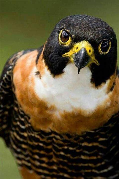 Jaket Macbeth Bird By Snf2012 25 best ideas about macbeth plot on plot of