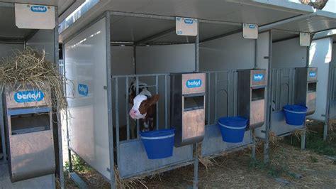 gabbie per vitelli svezzamento vitelli bertasi