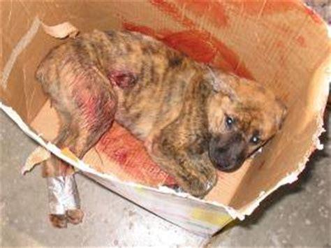 imagenes animales abrazados maltratos enfermedades y olvido los perros que alg 250 n