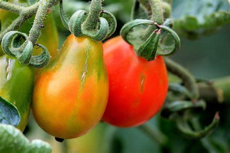 best plants which arethe best plants for aquaponics aquaponics