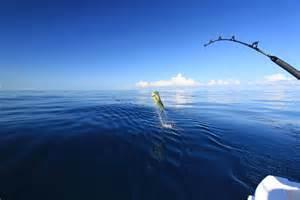 Sport fishing wallpaper big fish tours sport fishing charter company