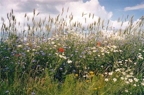 wilde bloemen in duitsland sommer in masuren sommer pinterest masuren polen en