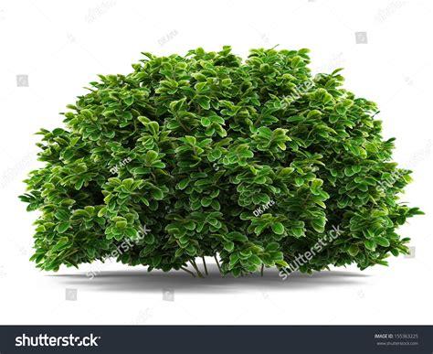 plant bush isolated stock illustration 155363225