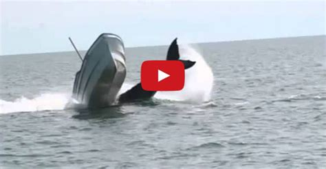 killer whale attacks fishing boat how to fishing killer whale attacks a mexican fishing
