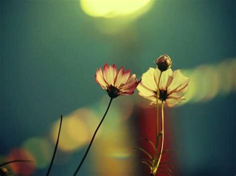 flower wallpaper for macbook pro free flowers mac wallpapers imac wallpapers retina
