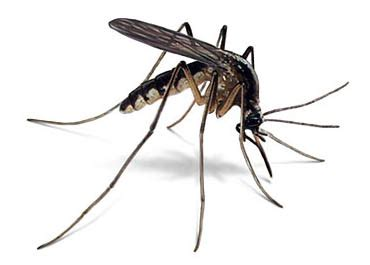 how to kill mosquitoes in home r032504c join gps alliance join mark tan 93874786 how to