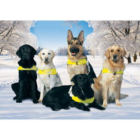 guiding for the blind cards 31 best guide dogs for the blind images on