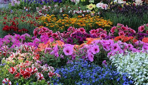 mostra fiori firenze mostra mercato primaverile di piante e fiori giardino dell