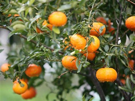 fruits of trees how to select fruit trees hgtv