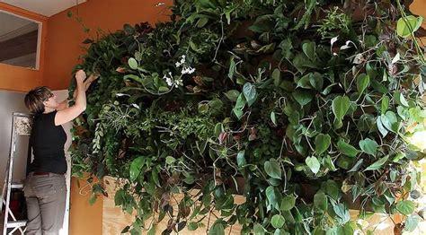 best vertical garden plants top 10 plants for an indoor vertical garden