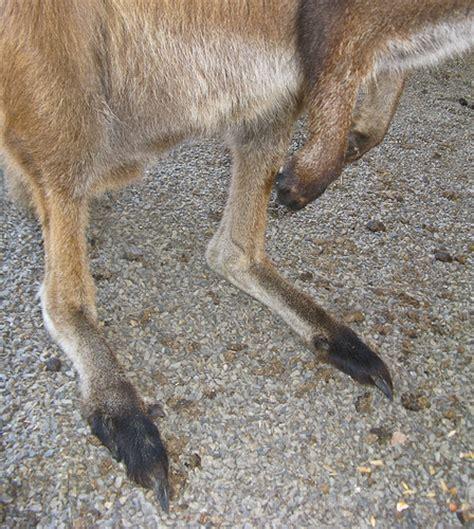 215 Square Feet Kangaroo Feet Flickr Photo Sharing