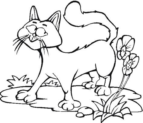 coloring pages flowers and animals free coloring pages cats