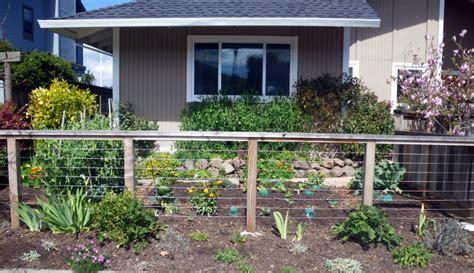 designing  edible front yard edible landscaping