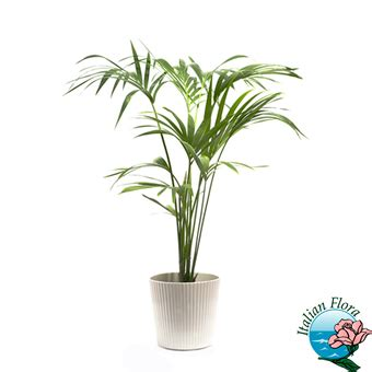 fiori a domicilio prezzi bassi vendita piante da negozio a domicilio prezzi bassi