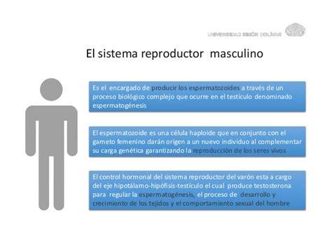 aparato reproductor masculino sistema reproductor masculino