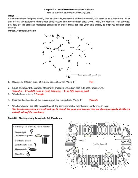 Cell Membrane Structure And Function Worksheet by Chapter 3 4 Membrane Structure And Function How Do