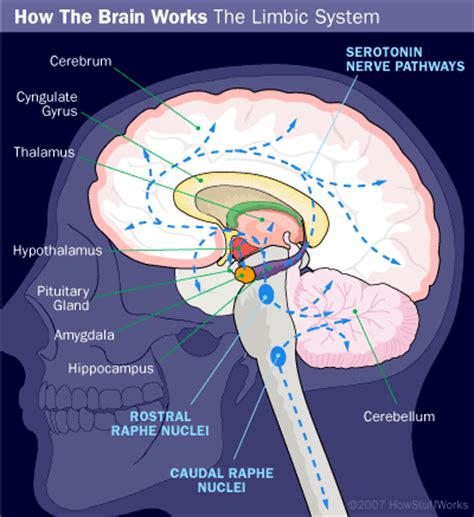 causes of depression howstuffworks
