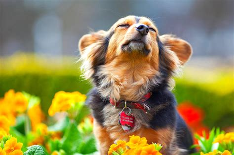puppies and flowers puppies in flowers www imgkid the image kid has it