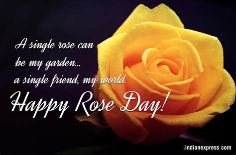 happy rose day  wishes gifs  quotes images
