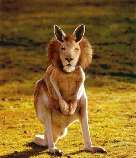 real or fake 8 bizarre hybrid animals live science 12 more bizarre mutant animals smosh