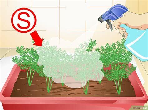 coltivare carote in vaso come coltivare le carote in vaso 19 passaggi