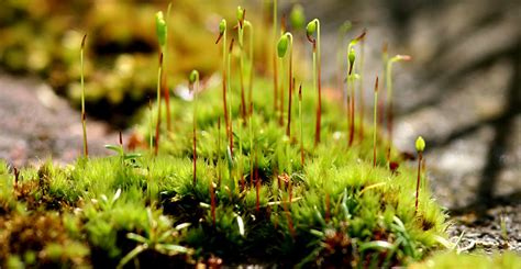 how many types of mosses are there ask forget this st paddy s day keep the green on the shamrocks not your deck ask