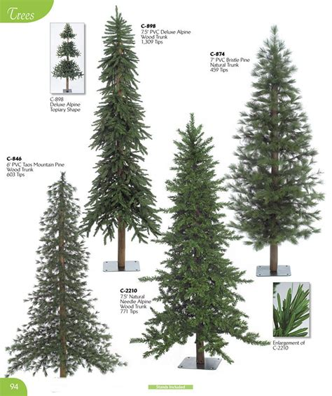 types of evergreen trees list pictures to pin on pinterest